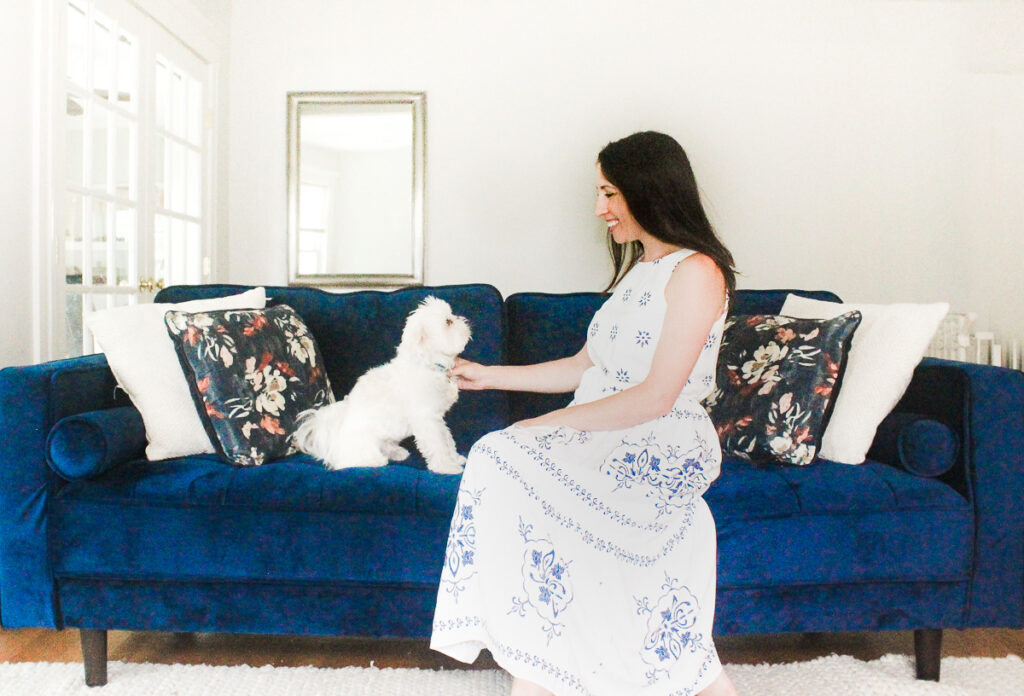 Blue couch with Chewy